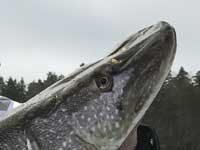 Hauen kalastusretket